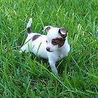 Puppy In The Grass by byuchic