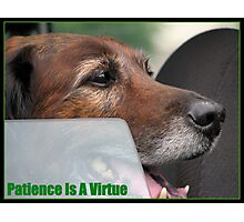 Patience is a virtue Photographic Print