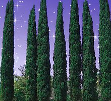 Lundblade Conifers - Starry Eve by Wendy J. St. Christopher