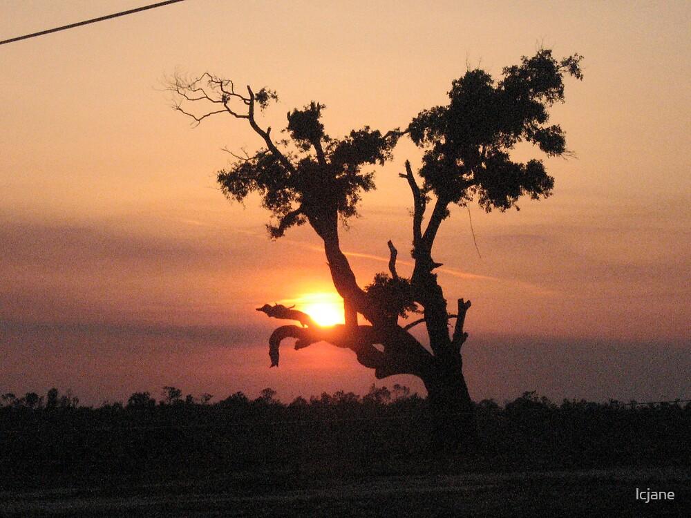 """""""Katrina Tree"""" by lcjane"""