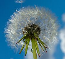 Make a Wish... by Renae