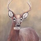 Whitetail Deer Buck by Charlotte Yealey