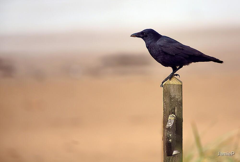 Crow by JamieP