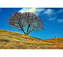 """""""One Tree Hill"""" Photographic Print"""