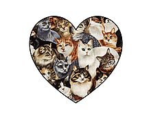 All The Kitties Photographic Print