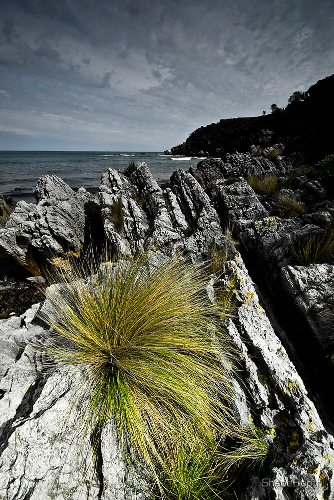 Coastal Grass by ShaneBooth