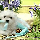 Hermes the Maltese - My Little Imp ! by Morag Bates