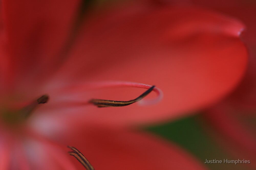Stamens inside pink by Justine Humphries