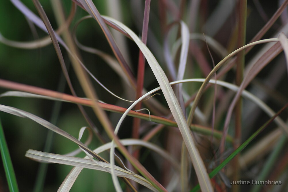 Curly Grass by Justine Humphries