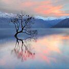 Pink Sky at Lake Wanaka by Peter Hammer