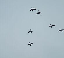Birds in Flight by windrider