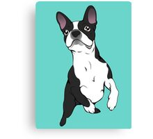 Boston Terrier Time!  Canvas Print