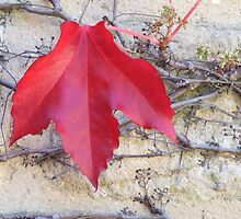 Red Leaf on Brickwork by Mark Wilson