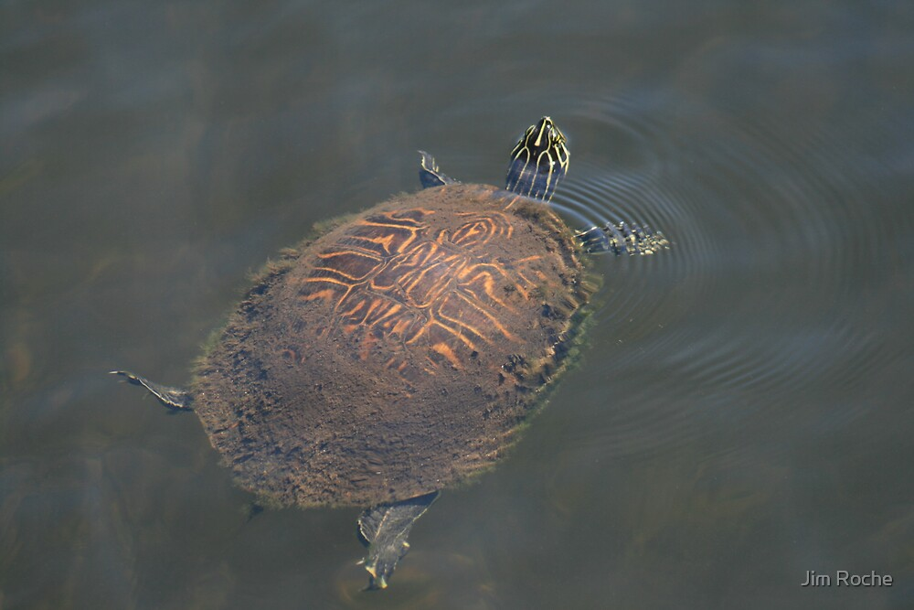 Lazy Turtle by Jim Roche