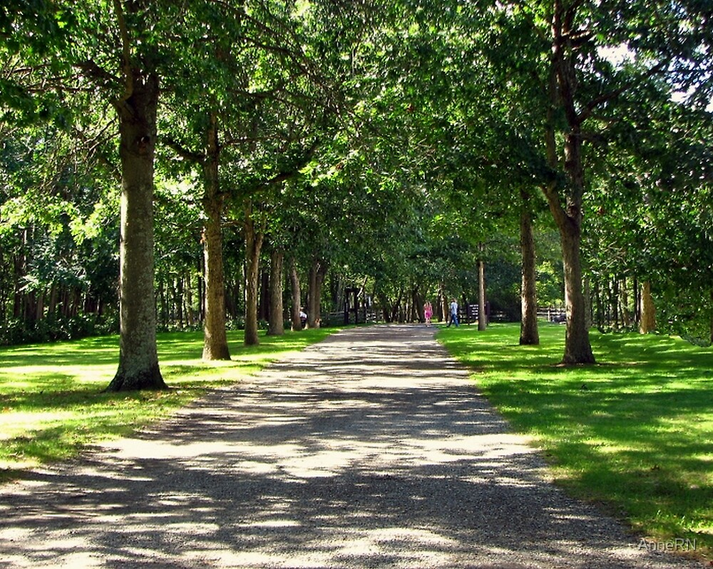 Tree Lined by AnneRN