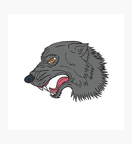 Grey Wolf Head Growling Drawing Photographic Print