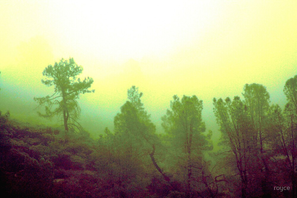Morning Haze by royce