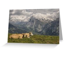 Cows with a View Greeting Card