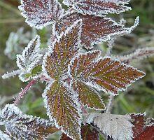 Morning Frost 3 by Martha Medford