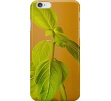 The Herb Called Basil iPhone Case/Skin