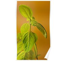 The Herb Called Basil Poster