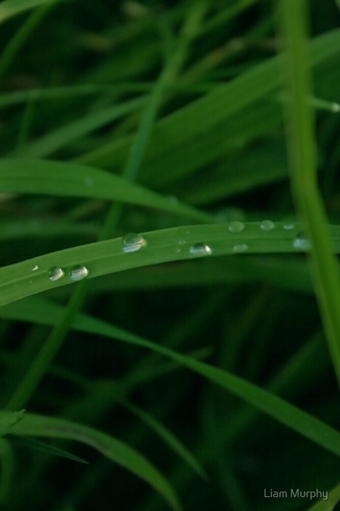 Droplets by Liam Murphy