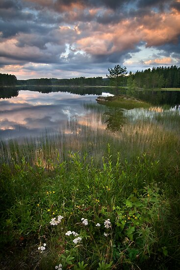 In The Wilderness by Anders Naesset