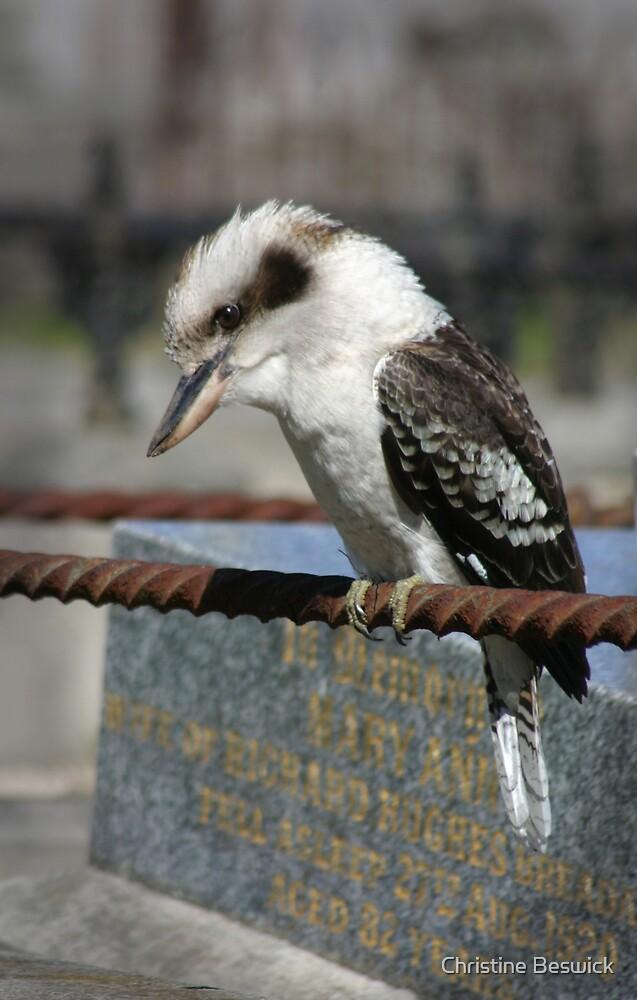 Kookaburra by Christine Beswick