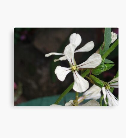 Flower from Rocket Herb Canvas Print