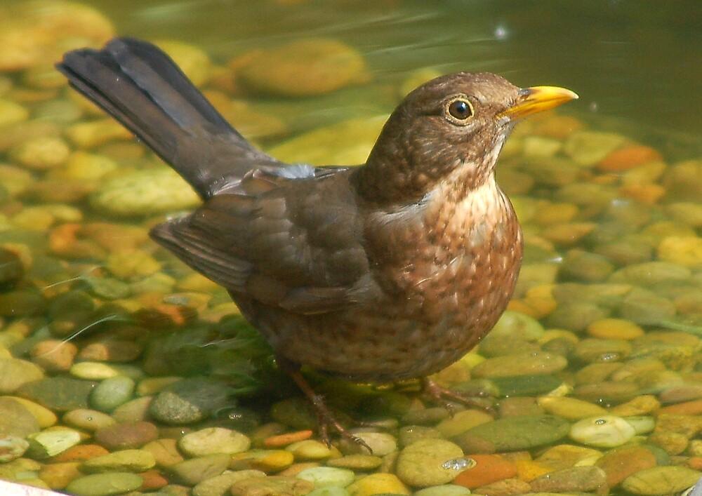 A bird in a bath by DaveP