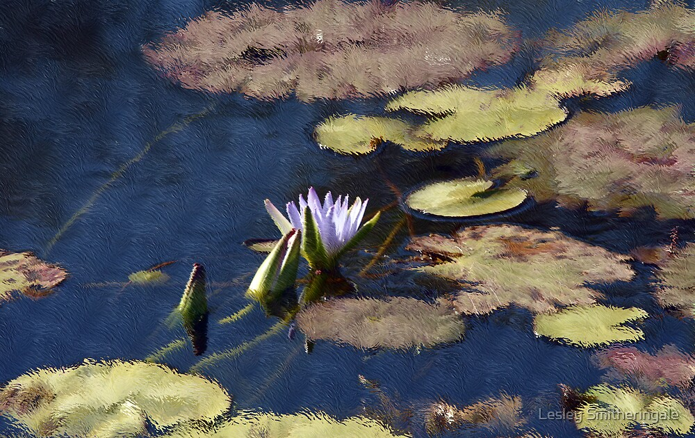 Waterlilies on the Lake by Lesley Smitheringale