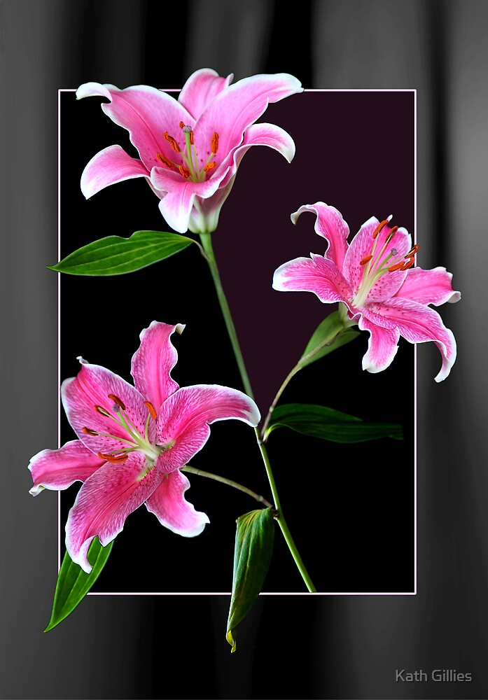 Pink Liliums by Kath Gillies