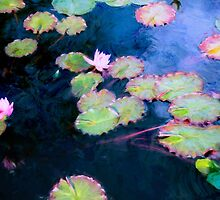 Water Lilies  by John Rivera