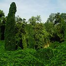Kudzu covered grotto by Robin Harrison