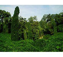 Kudzu covered grotto Photographic Print