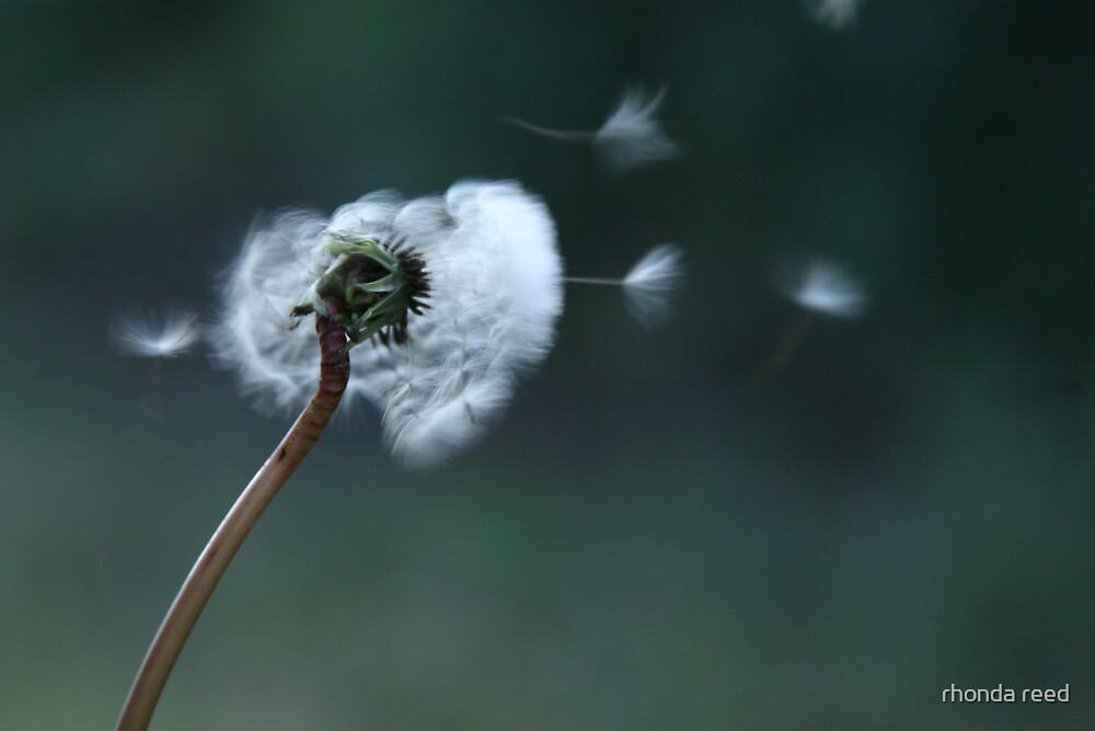 Make a wish... by rhonda reed