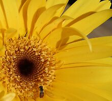 YELLOW CURL by amyh