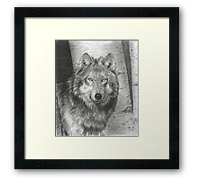 Wise Eyes Framed Print