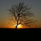 SUNSETTING by DarrellMoseley