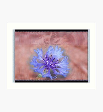 Blue Lone Bachelor Button Comp Art Print