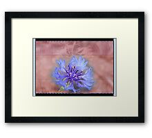 Blue Lone Bachelor Button Comp Framed Print
