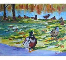 Guard Duck  Photographic Print