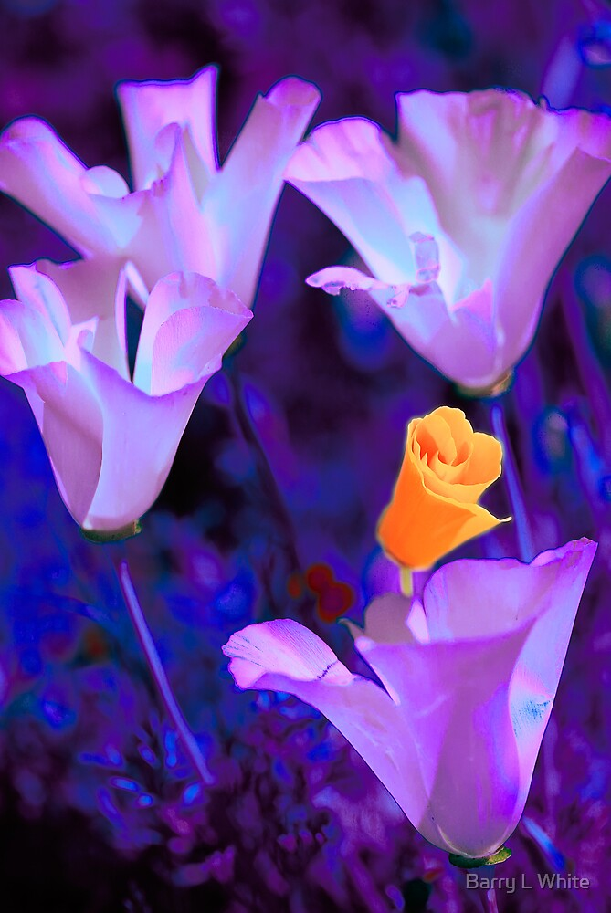 Psychedelic Poppies #1 by Barry L White