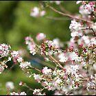 Spring is here! by KrisKeen
