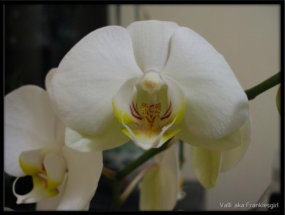 White Orchid by Valli  aka Frankiesgirl