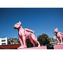 The Pink Woof Photographic Print