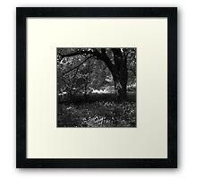 Full summer verdant green, with black veins (i) - photography Framed Print