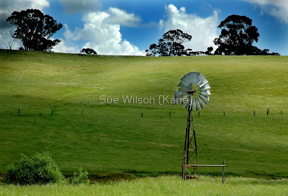 On the land by Sue Wilson (Kane)