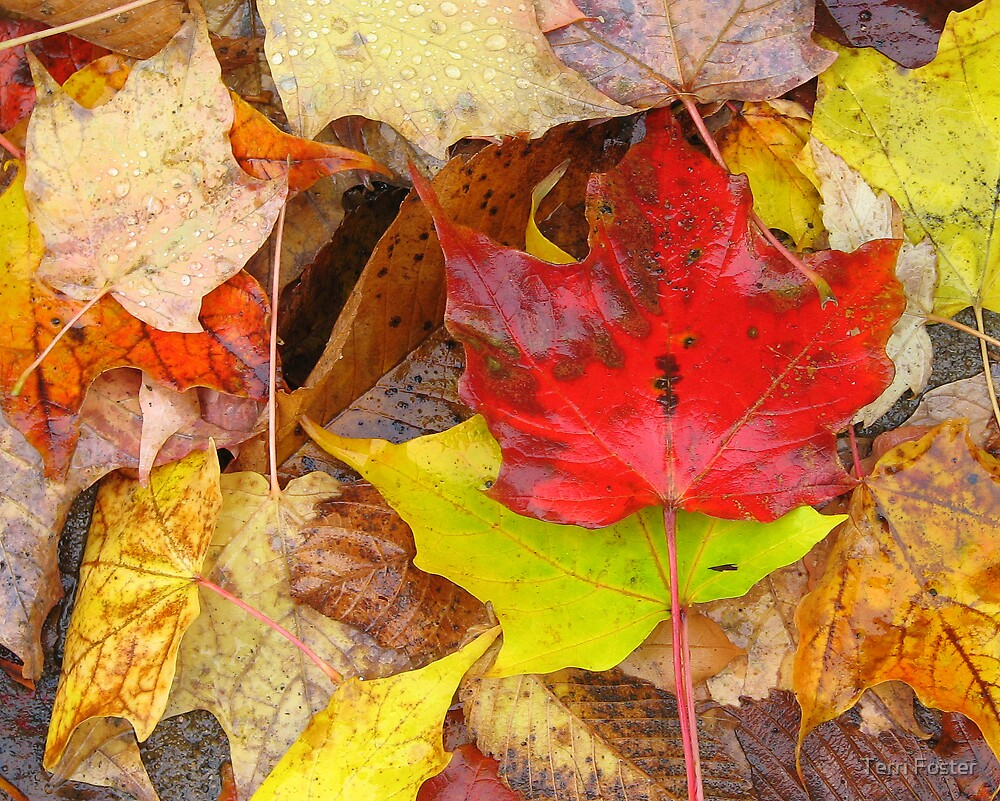 Fall Leaf Collage - Quebec by Terri Foster