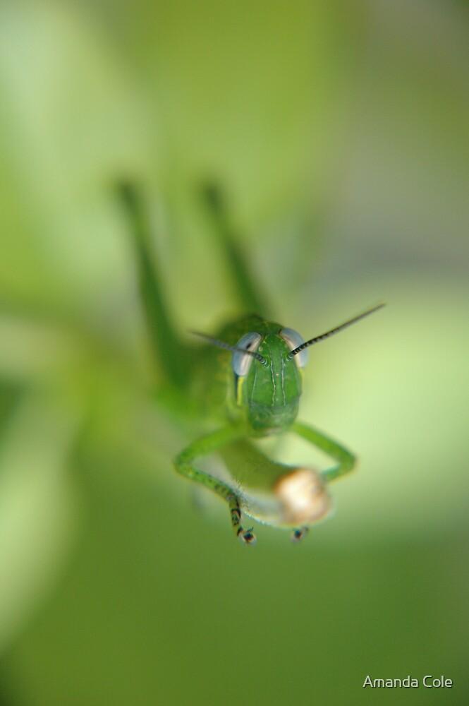 Byron Grasshopper by Amanda Cole